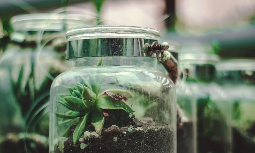 terrarium in vetro